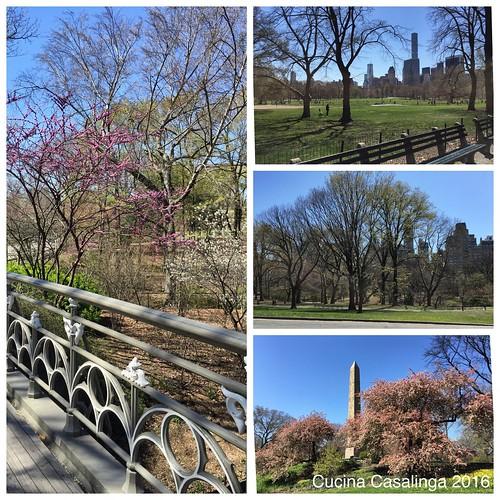 2016 04 15 050 Central Park CuCa