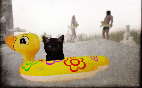 Kitty goes beach ;)