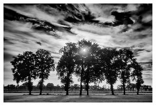 Trees against the setting sun
