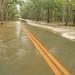 Flood (89,900 CFS at 1229 EST, Gage Heigh - 15.71 feet, Velocity - 3.52 feet per second), Altamaha Park Road, Altamaha River Flood Plain, Glynn County, Georgia 2 by Alan Cressler