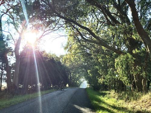 Kangaloon Road summer morning #ridethehighlands