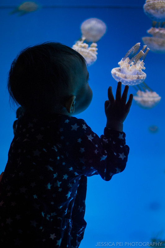 Looking at the Jellies
