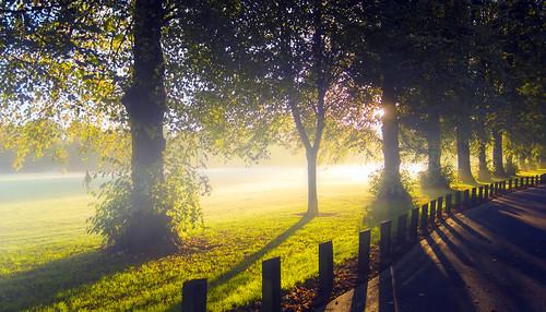 road park morning light shadow sun mist tree grass leaves fog wales sunrise canon eos dawn outdoor branches cardiff fields 5d llandaff pontcanna mkiii llandafffields stevegarrington