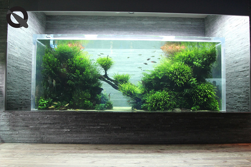 KQ Sumida Aquascape 15