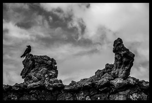 Crow on the rocks