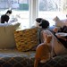 L to R: Tina, Camille (outside), Idaho, Otis (foreground), Charlie  & Sally (the human) by rootcrop54