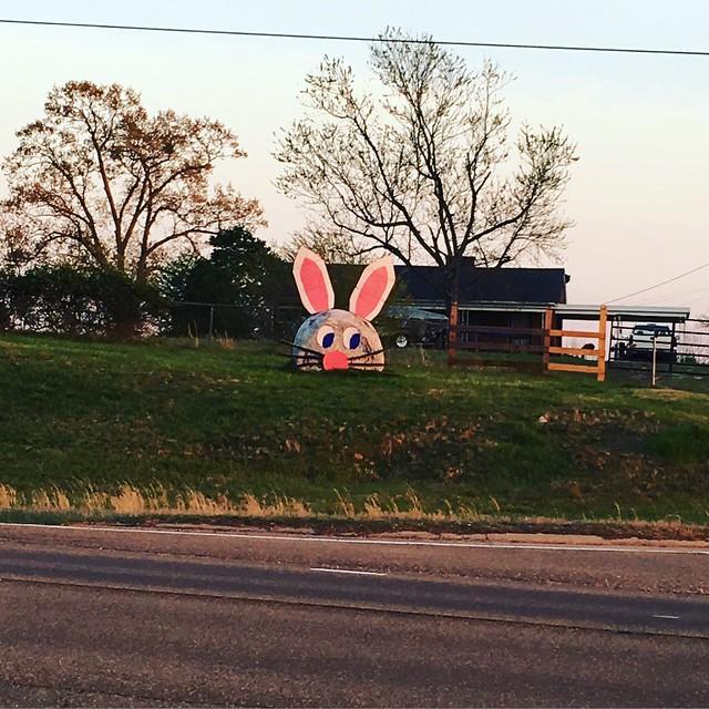 hay, bunny!