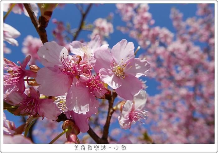 【日本東京】代代木公園/賞櫻散步遛小孩 @魚樂分享誌