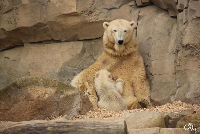 Zoo Bremerhaven 10.04.16 1.Teil26