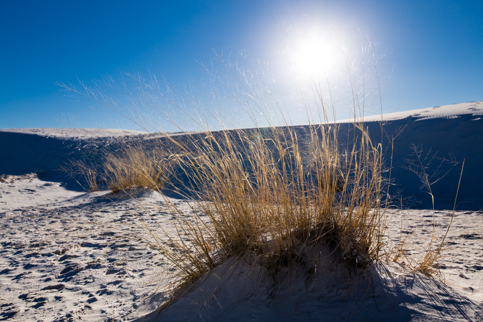 White Sands-1463