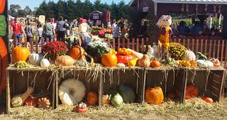 Duffield's Farm Pumpkin Land