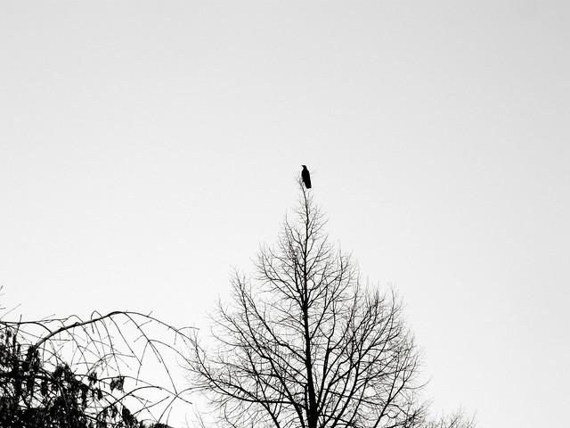un oiseau solitaire