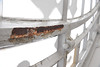 Rust on the iron tracery of the clock face