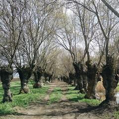 'If you go deep enough into the way of peace, you find power' #ammiq #wetlands #livelovebekaa #livelovebeirut #bekaa #nature #naturelovers #lebnon #livelovelebanon #lebanon_hdr #ptk_lebanon #lebanontraveler #lebanonbyalocal #superlebanon #ig_Lebanon