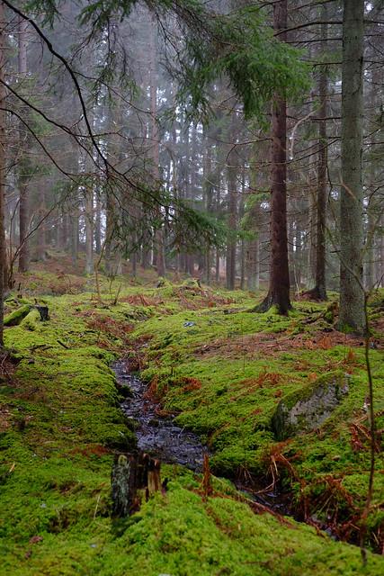 Stensund / mossy Velvia (emulation)