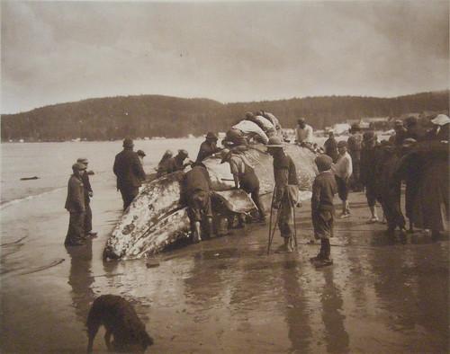 makah-whalers-1910-wiki