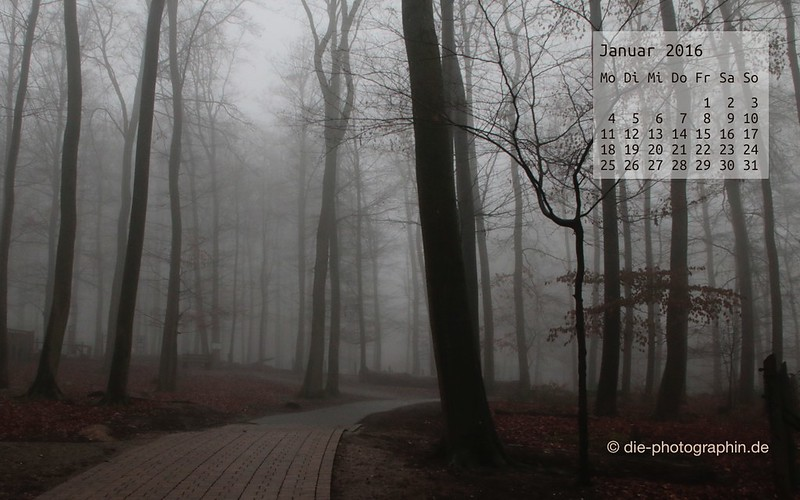 januarwald_januar_kalender_die-photographin