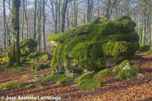 Parque Natural de Urbasa #DePaseoConLarri #Flickr --0538