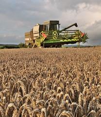 Landwirtschaft (agriculture)