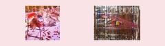 """Diary Tapestry 1. Jänner 2016 Found let off fireworks Pagoda / Daniel Spoerri """"Schöne Bescherung"""" (""""Nice handing out of presents at Christmas"""", """"A nice mess"""") Tagebuch Teppich: Neujahr gefundene abgebrannte Feuerwerkskörper Fontäne  / Glas Würfel MQ"""