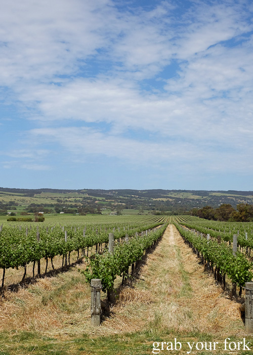 Primo Estate vineyard in McLaren Vale, South Australia
