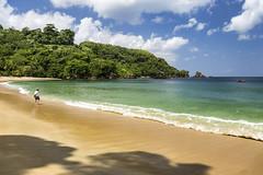 Rainforest Beach