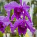 Flowers macro by utidafotografias
