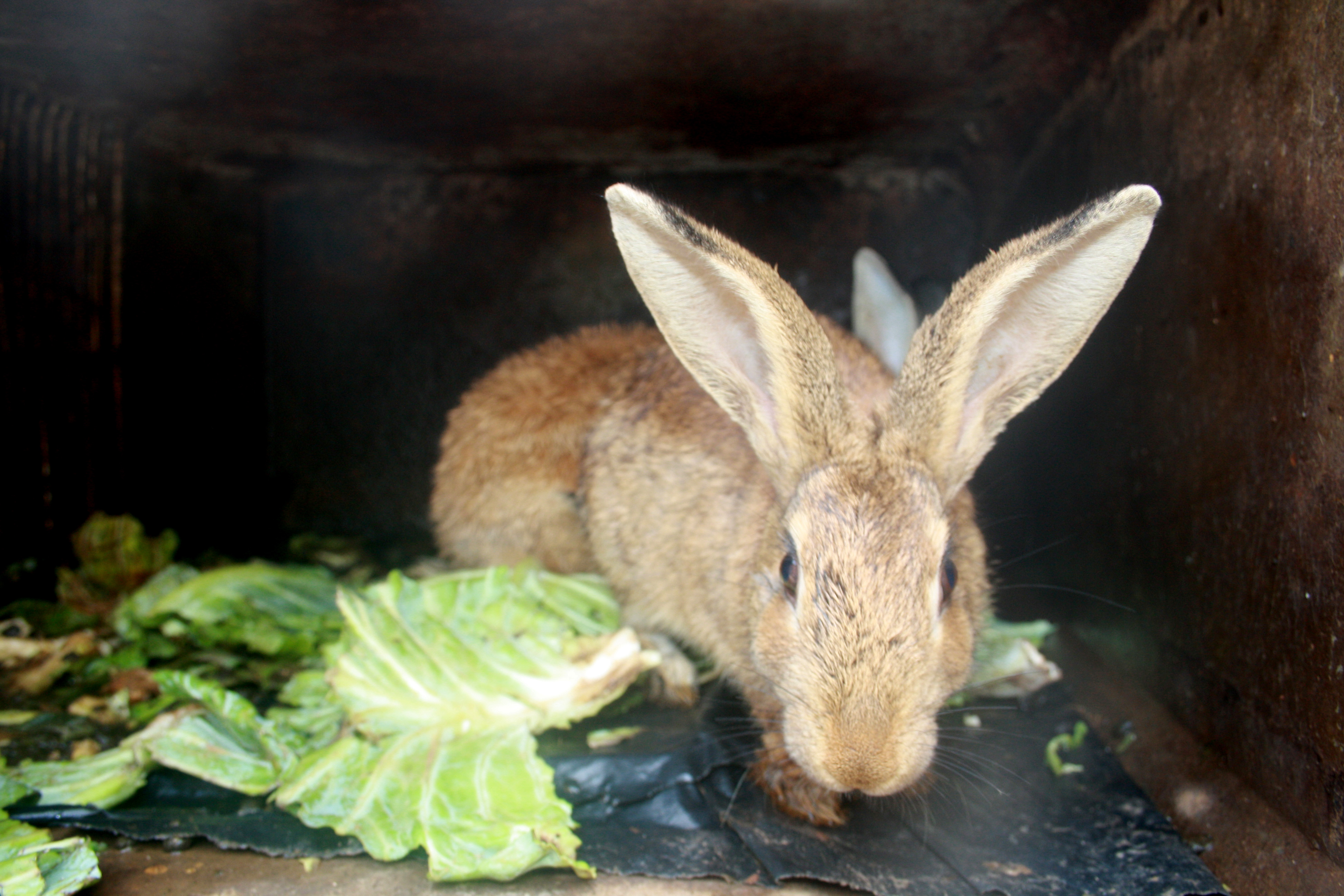 rabbit farming now a big hit in zimbabwe inter press service