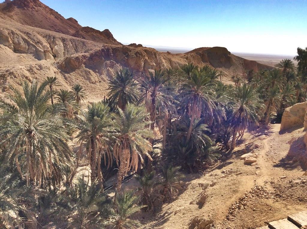 Desert of Tunisia #tunisia #desert