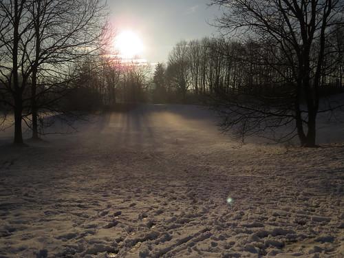 park morning trees winter snow tree fog sunrise germany munich