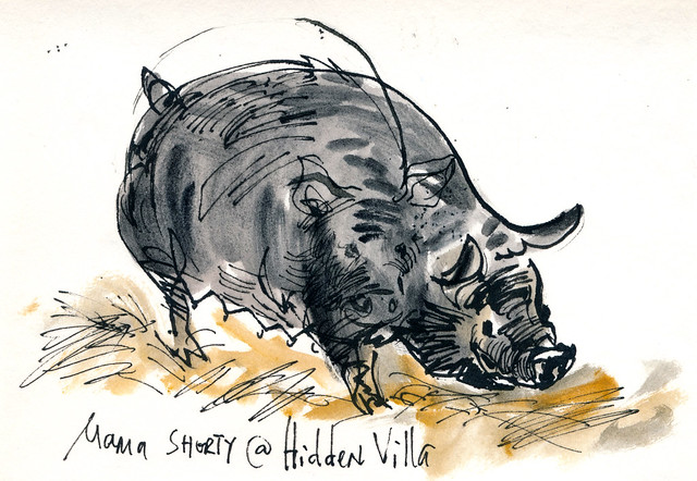 Sketchbook #94: Hidden Villa Farm