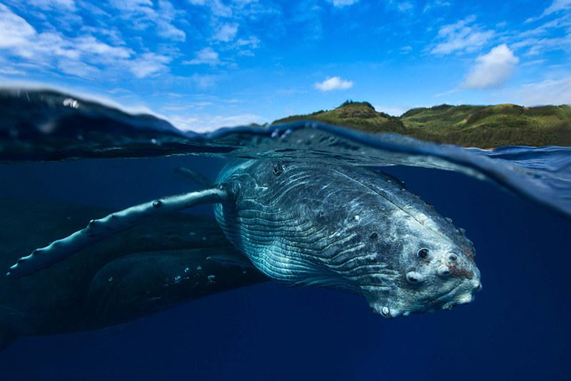 world-whale-day-photos-151__880