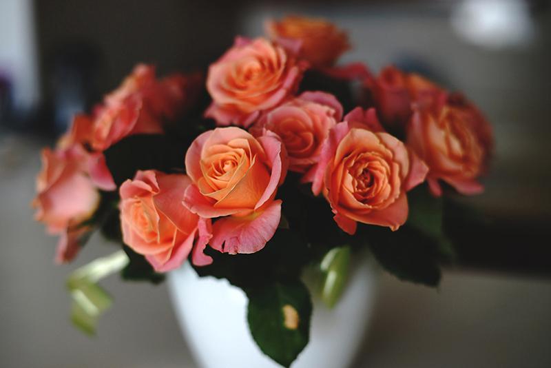 rose-photo-2