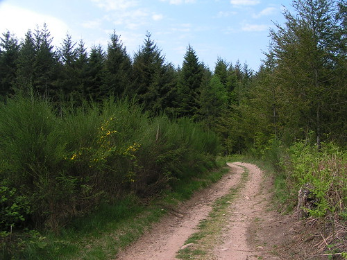 20080511 20489 0901 Jakobus Wald Weg