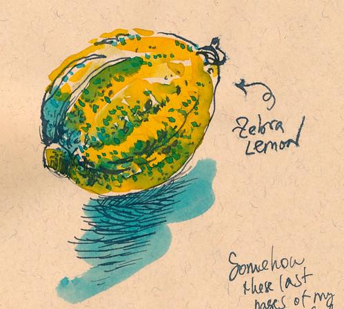 Sketchbook #93: Zebra Lemon