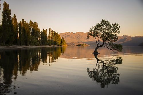 new summer lake reflection tree sunrise island holidays south zealand willow wanaka thatwanakatree lovewanaka