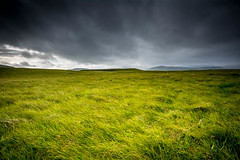 Iceland Meadows