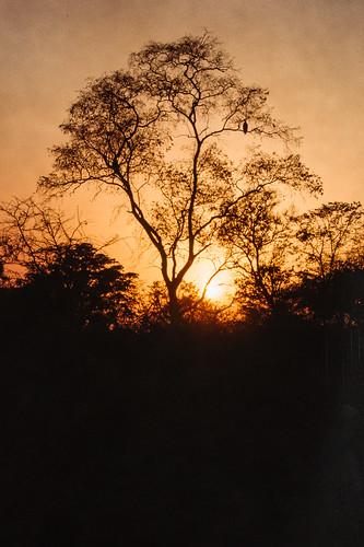animal coucherleverdesoleil faune mamal mammifere sauvage savane savannah sunrise sunset wild wildlife