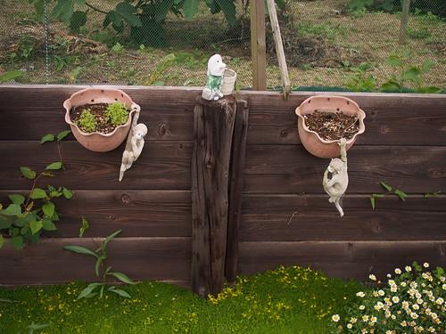 P6141135 garden