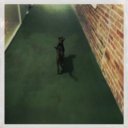 hipstajakehallway9