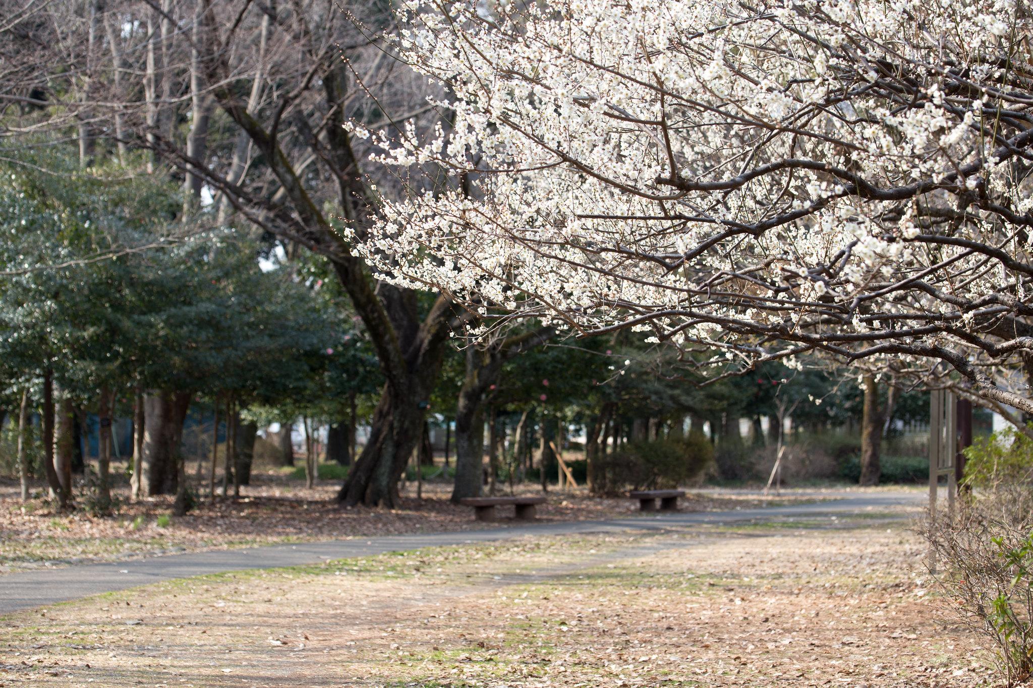 2016-02-28 武蔵野公園 001-28