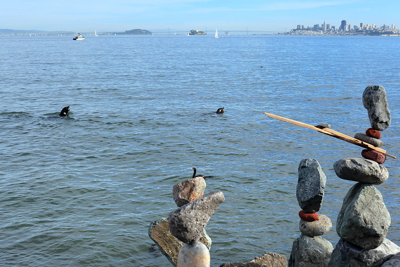 Sea lions and rocks