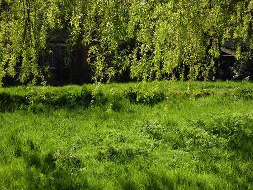 Totteridge Green in mid April