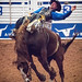 Bronco Rider, Rodeo Austin