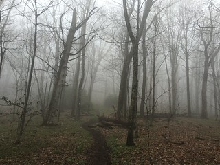Mist adding a slightly spooky feeling to the woods coming down from Walnut Mountain Shelter