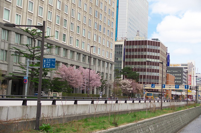 2016428のホテルモントレエーデルホフ札幌の桜_08