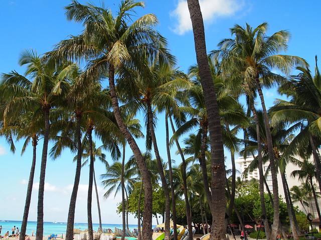 PB290515 waikiki ワイキキビーチ ハワイ hawaii デューク・カハナモク像 ひめごと ヒメゴト