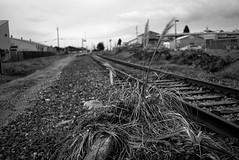 weedin' on the railroad