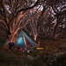 Camp in the snowgums_c by gnarlydog