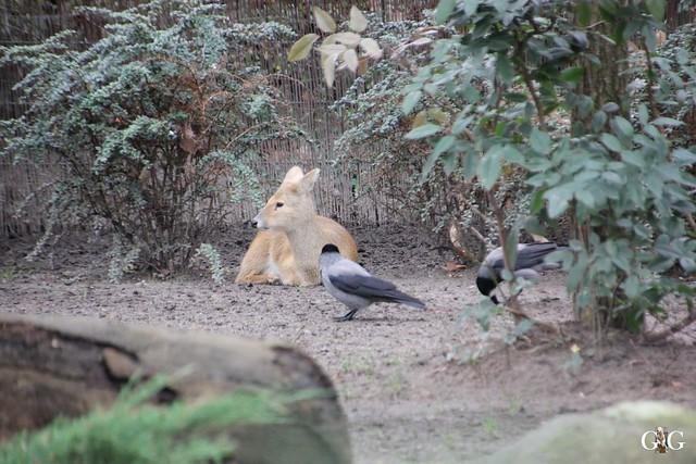 Kurzbesuch im Zoo 20.12.201529